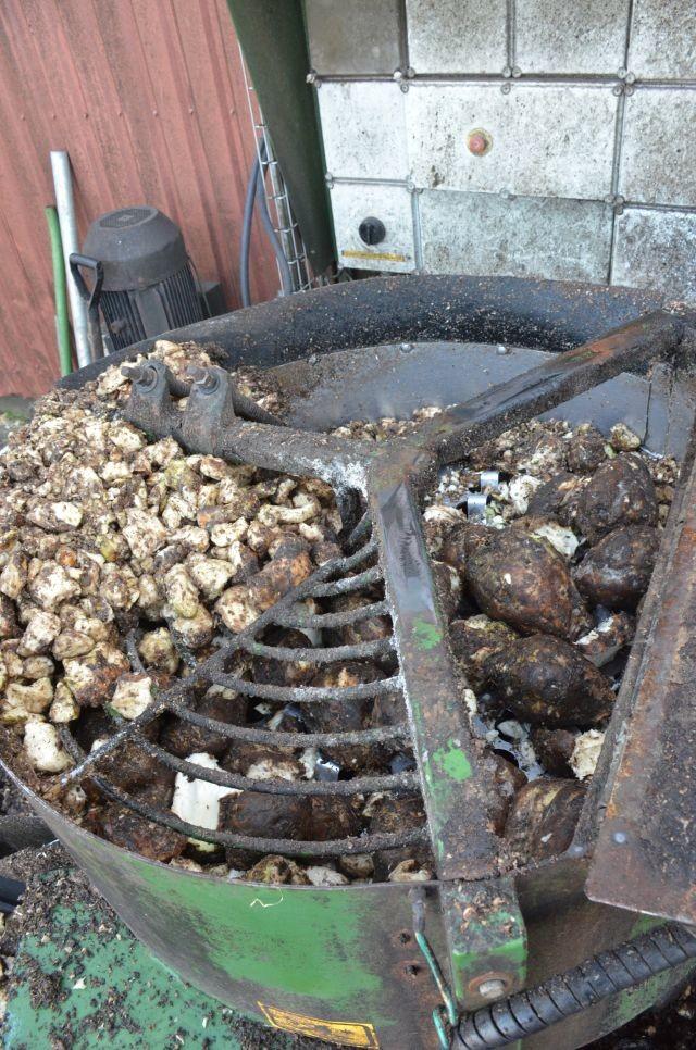 Les betteraves sont broyées en morceaux de 4 cm avant d'être transférées dans la mélangeuse.