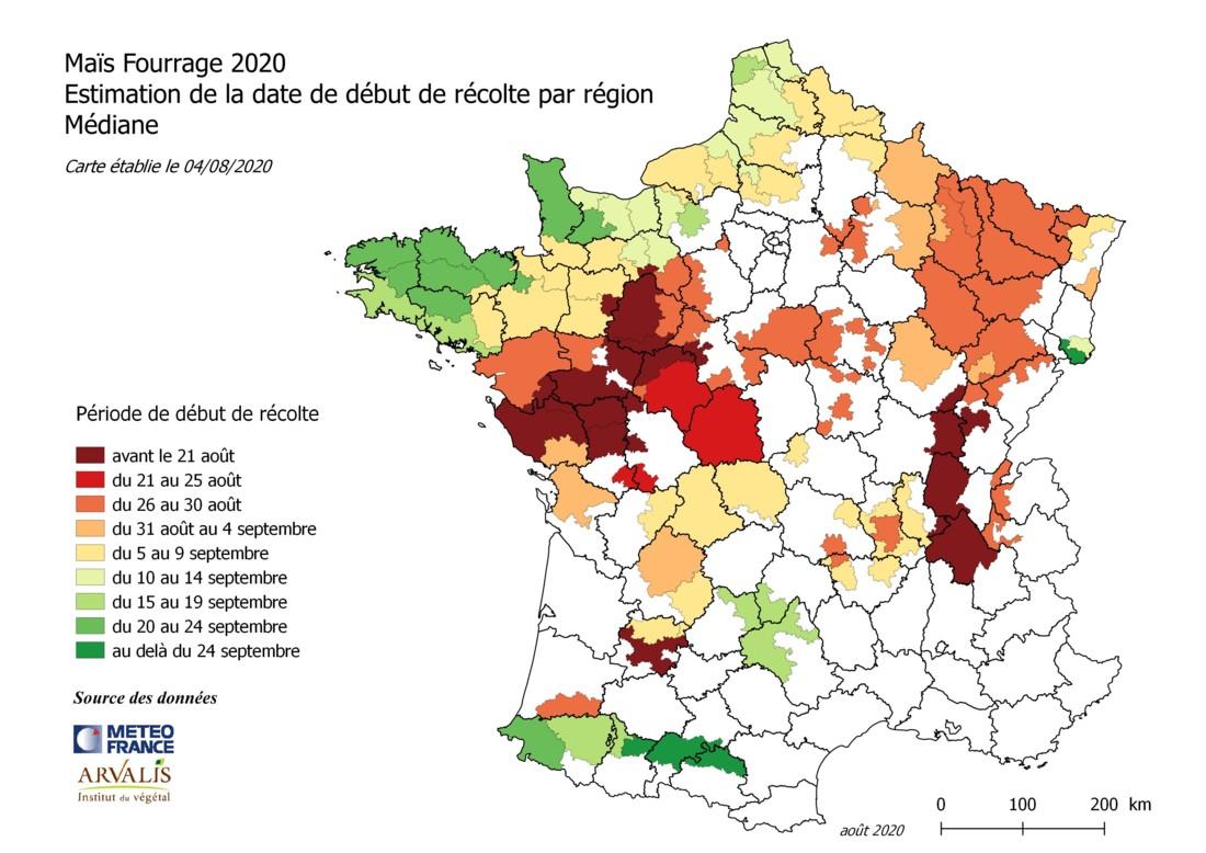 Maïs fourrage 2020. date de récolte estimée au 4 aout 2020