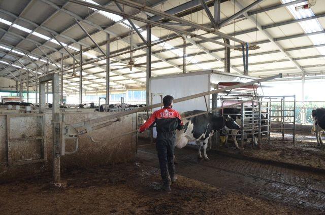 Sur l'élevage Vanzetti(reportage PLM 504 d'octobre 2018)