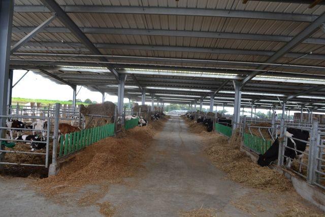 Et des boxes pour préparer les vaches de concours...